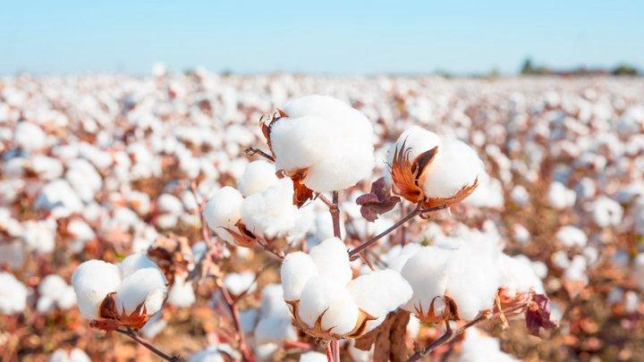 Trading_Cotton_Futures